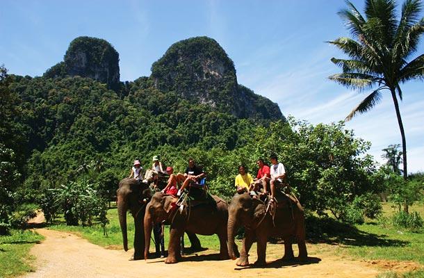 elephants on a trek in front of rocky outcrop in Krabi