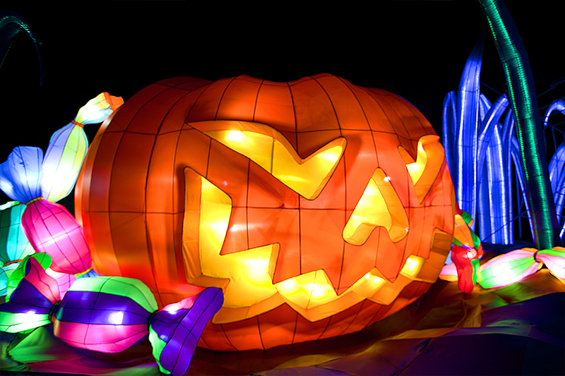illuminasia pumpkin